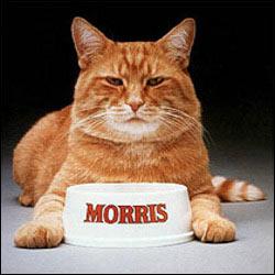 Morris_Cat