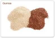 Quinoa_big