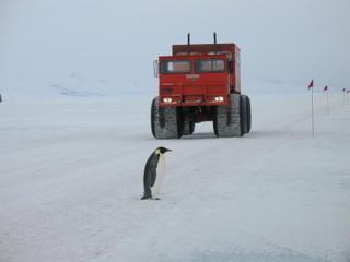 Penguintruckin