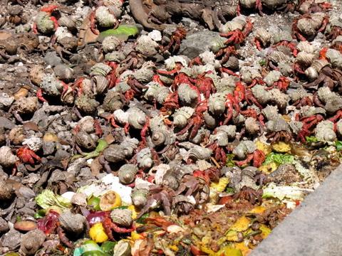 Crabspit