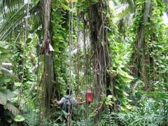 Jungleboys
