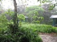 Greenerypalmyra