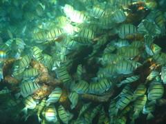 Fishies_2