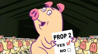 Pig_2_2