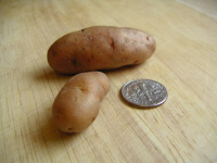 Tinypotato_1